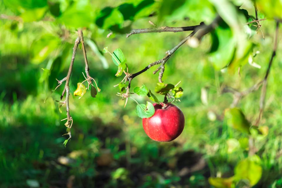 Æbler for din sundheds skyld