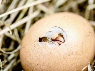 Æg som proteinkilde