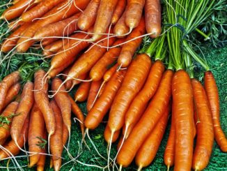 Gulerødder og Betacaroten