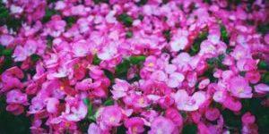 Min nye blog