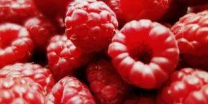 Hindbær - C-Vitamin bomben